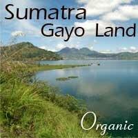 Tanah Gayo - Sumatra
