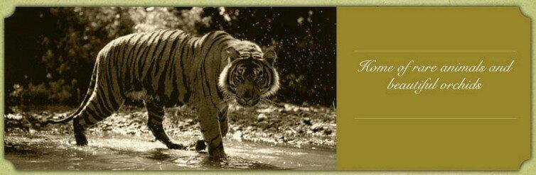 Kopi & Harimau Sumatera