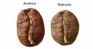 Arabika VS Robusta